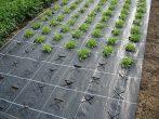 Agroszövet 2 m/100m