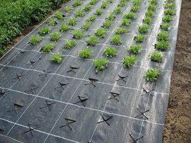 Agroszövet 3m/100m